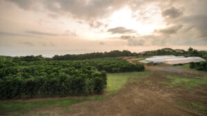 Nolyssa Farm