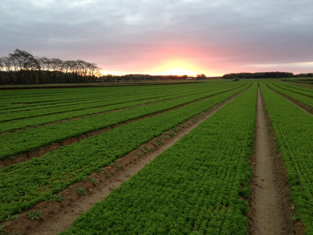 Satur Farms at Sunrise