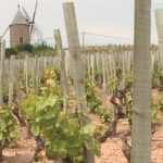 Beaujolais at Its Best