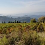 Chianti Colli Fiorentini: Exploring Wines from the Outskirts of Florence