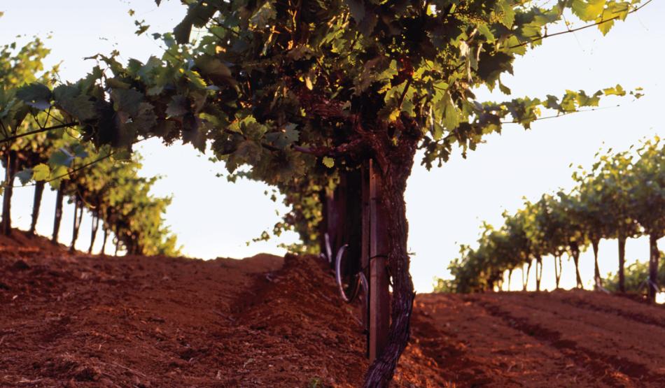 Monte Rosso Vineyards
