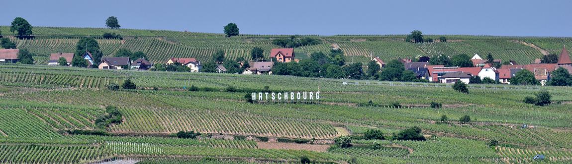 Cattin's Hatschbourg vineyard