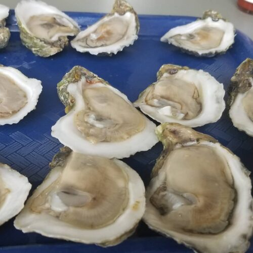 oysters on the half sheel